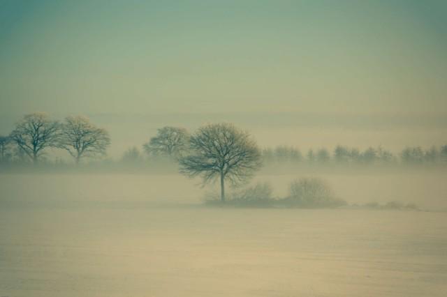 Winter_Fog_by_Daniel_Vesterskov